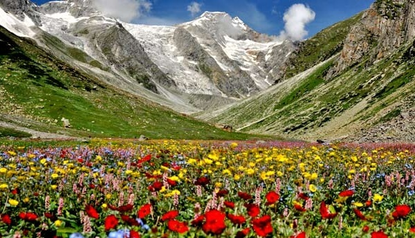 valley-of-flowers-trek